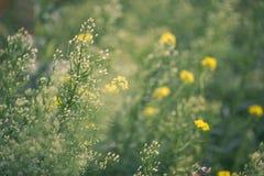 Priorità bassa naturale di estate Fotografia Stock