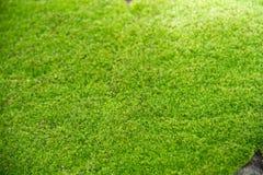 Priorità bassa naturale verde del muschio Fotografie Stock Libere da Diritti