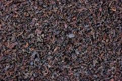Priorità bassa nera dettagliata di struttura della foglia di tè Immagini Stock Libere da Diritti