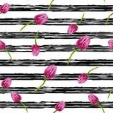 Priorità bassa nera a strisce Illustrazione con le bande nere ed i tulipani rosa Fotografia Stock Libera da Diritti