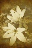 Priorità bassa Old-styled dei fiori immagine stock libera da diritti