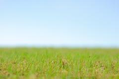 Priorità bassa regolare del cielo dell'erba verde Fotografia Stock Libera da Diritti