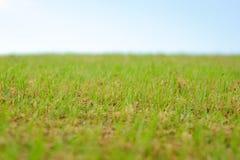 Priorità bassa regolare del cielo dell'erba verde Immagine Stock Libera da Diritti
