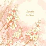 Priorità bassa romantica di vettore con il fiore di ciliegia Fotografie Stock Libere da Diritti