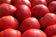 Priorità bassa rossa dei pomodori Immagine Stock Libera da Diritti
