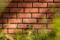 Priorità bassa rossa del muro di mattoni Immagini Stock Libere da Diritti