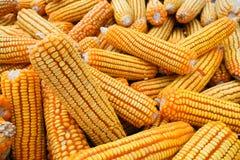 Priorità bassa secca del cereale Fotografia Stock Libera da Diritti