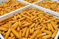 Priorità bassa secca del cereale Fotografia Stock