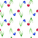 Priorità bassa senza giunte con i tulipani Fondo dell'acquerello con i tulipani rossi e blu su fondo bianco Fiori rossi disegnati Fotografia Stock Libera da Diritti
