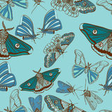 Priorità bassa senza giunte con il lepidottero sveglio Fotografia Stock