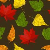 Priorità bassa senza giunte di autunno Fotografia Stock Libera da Diritti