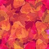 Priorità bassa senza giunte di autunno Fotografie Stock