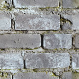 Priorità bassa senza giunte - muro di mattoni moldy sporco Fotografia Stock Libera da Diritti