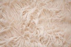 Priorità bassa simile a pelliccia grigiastra o color crema Immagini Stock Libere da Diritti