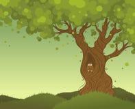 Priorità bassa sola dell'albero Fotografia Stock Libera da Diritti