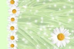 Priorità bassa stagionale della margherita e dell'erba di estate Fotografia Stock Libera da Diritti