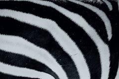 Priorità bassa a strisce di Grunge della zebra Immagini Stock