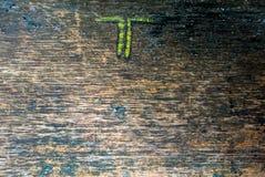 Priorità bassa, struttura di legno del granulo, particolare Immagini Stock Libere da Diritti