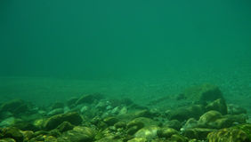 Priorità bassa subacquea Immagini Stock Libere da Diritti