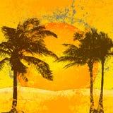 Priorità bassa tropicale Fotografia Stock