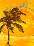 Priorità bassa tropicale Immagini Stock Libere da Diritti