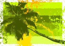 Priorità bassa tropicale Immagine Stock