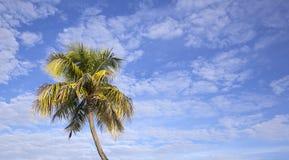 Priorità bassa tropicale immagine stock libera da diritti