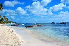 Priorità bassa tropicale Fotografie Stock Libere da Diritti