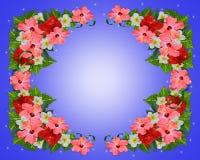 Priorità bassa tropicale dei fiori Fotografia Stock