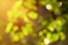 Priorità bassa vaga verde naturale Immagini Stock Libere da Diritti