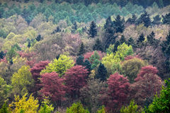 Priorità bassa variopinta degli alberi immagine stock