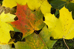 Priorità bassa variopinta dei fogli di autunno Fotografie Stock Libere da Diritti
