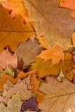 Priorità bassa variopinta dei fogli di autunno Immagine Stock