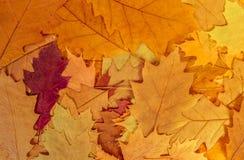 Priorità bassa variopinta dei fogli di autunno Immagini Stock