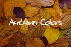 Priorità bassa variopinta dei fogli di autunno Autumn Colors Concept Wallpaper Fotografia Stock