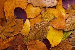 Priorità bassa variopinta dei fogli di autunno Autumn Concept Wallpaper Fotografie Stock