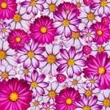 Priorità bassa variopinta del fiore Fotografia Stock