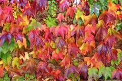 Priorità bassa variopinta del foglio di autunno Fotografie Stock
