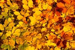 Priorità bassa variopinta di autunno Immagini Stock Libere da Diritti
