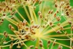 Priorità bassa vegetativa del Brown fotografia stock libera da diritti