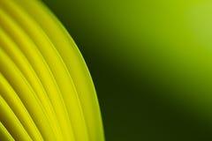 Priorità bassa verdastra di carta gialla II Fotografia Stock