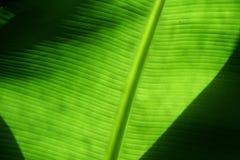 Priorità bassa verde Immagini Stock Libere da Diritti