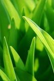 Priorità bassa verde fotografie stock