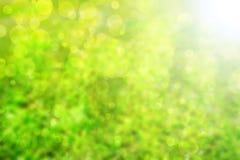 Priorità bassa verde astratta Fotografie Stock Libere da Diritti