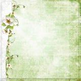 Priorità bassa verde con i fiori della mela royalty illustrazione gratis