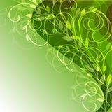Priorità bassa verde con l'ornamento floreale Fotografia Stock Libera da Diritti