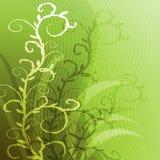 Priorità bassa verde con uno sprig verde Immagine Stock Libera da Diritti