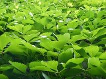 Priorità bassa verde dallo strato Fotografia Stock