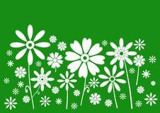Priorità bassa verde dei fiori bianchi Fotografia Stock Libera da Diritti