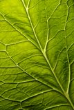 Priorità bassa verde del foglio Fotografie Stock Libere da Diritti